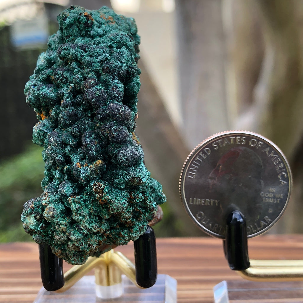 70g 1x1.5x2.5cm Green Malachite from Morocco
