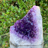 856g 11x10x10cm Purple Amethyst Cluster from Uruguay