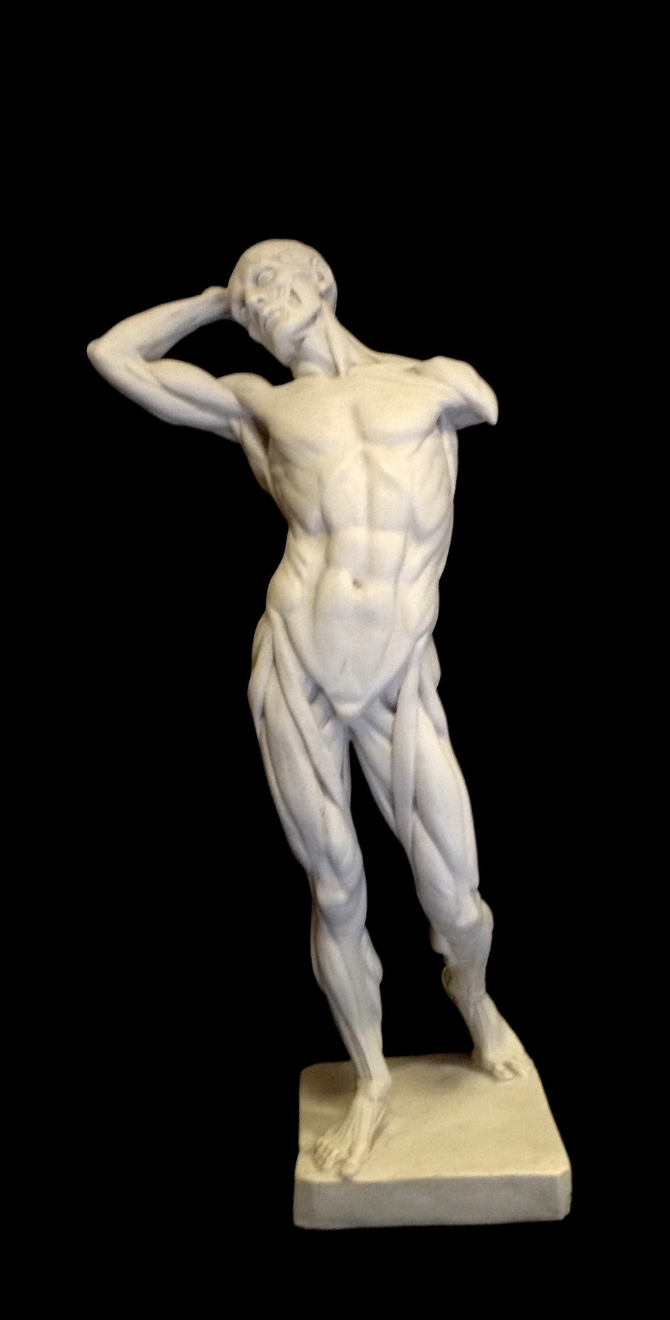Marble Sculpture by Sculptured Arts Studio / Anatomy Of A Man