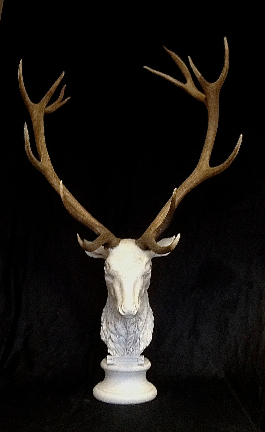 Deer Head With Natural Antlers