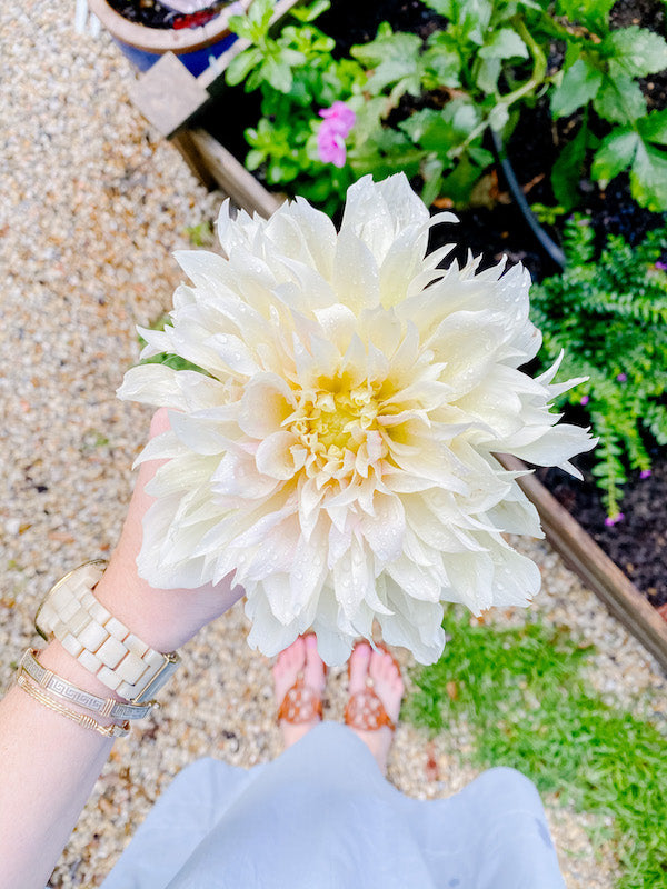 Gardening ideas to practice with children - smell the flowers