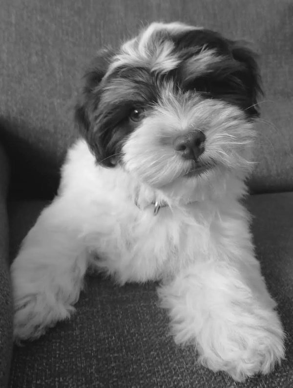 Black and white Puppy in Paris