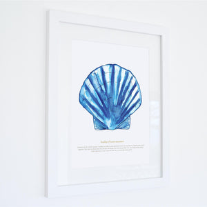 Scallop Watercolour Print SeaKisses Wall Art-SeaKisses