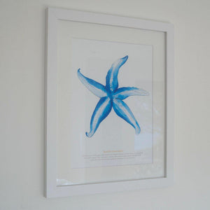 Starfish Large Framed Print Coastal Wall Art by SeaKisses