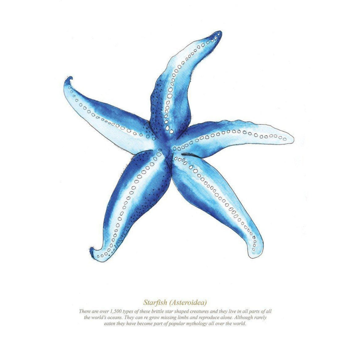 Starfish Large Framed Print