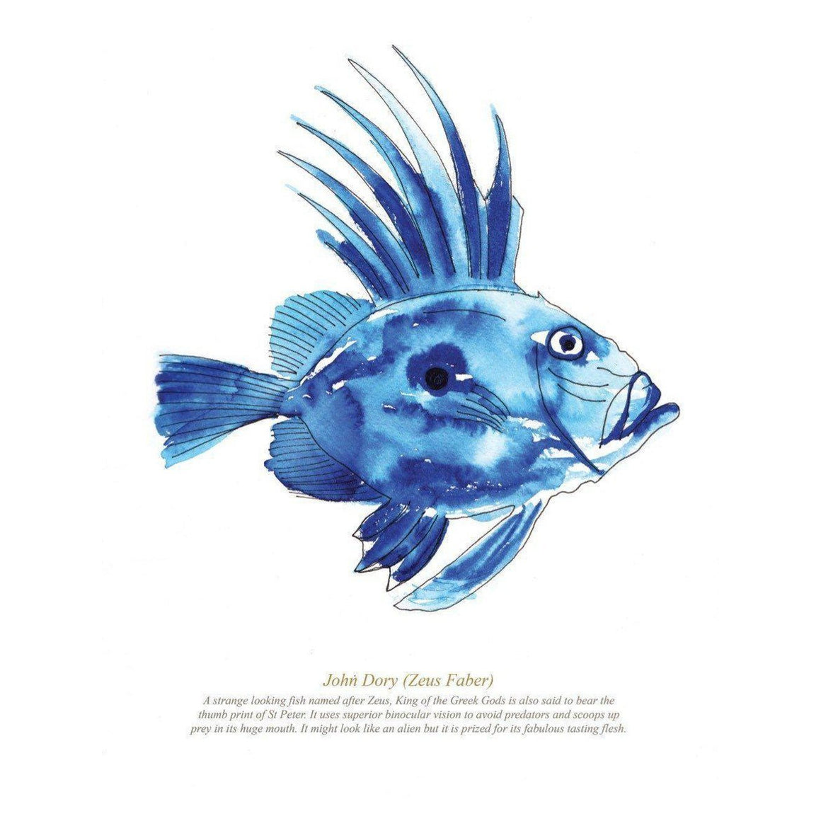 John Dory Watercolour Coastal Wall Art by SeaKisses