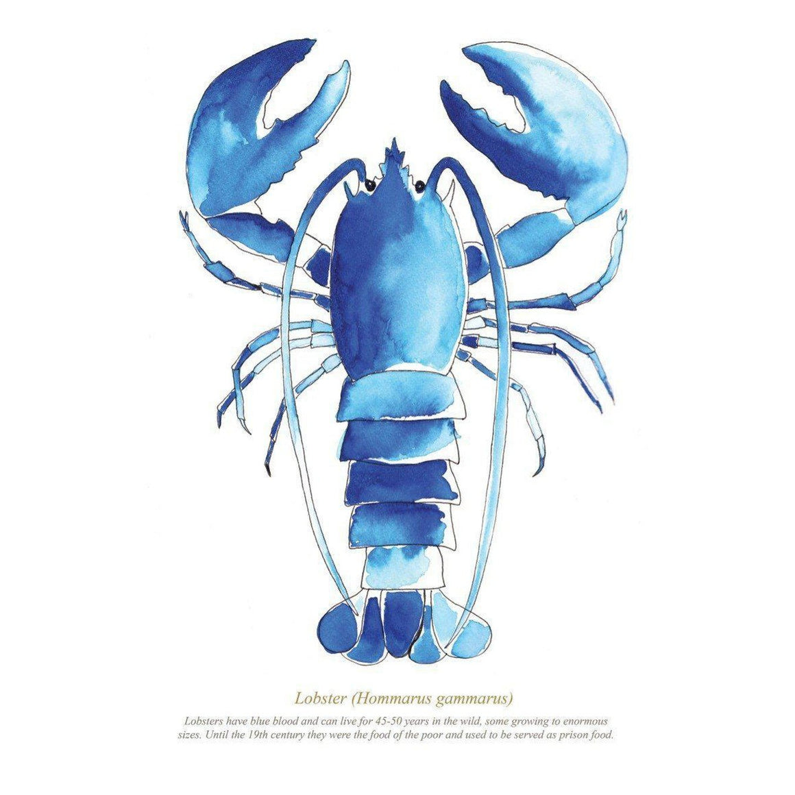 Lobster Large Framed Print