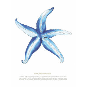 Starfish Watercolour Print