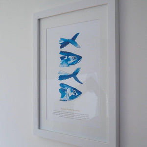 Mackerel Large Framed Print