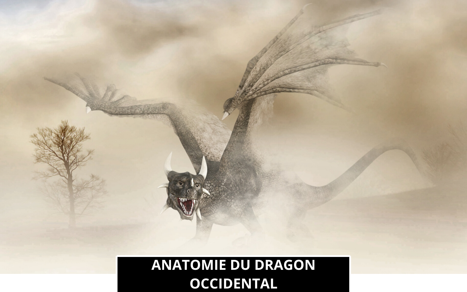 Anatomie et Physiologie du Dragon Occidental