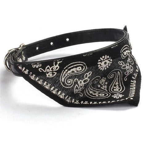 Small Puppy Pet collar With Scarf - Intrepid Soul