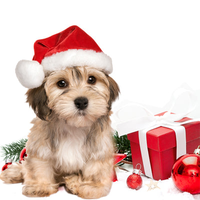 CHRISTMAS SAFETY for your Dogs