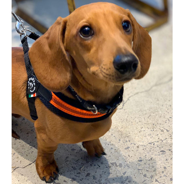 Dog Harness - Tuscan Orange:  Made in Italy