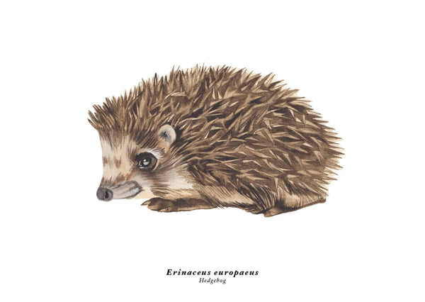 Rebellenclub x LISA Hedgehog - Kaart - Rebellenclub