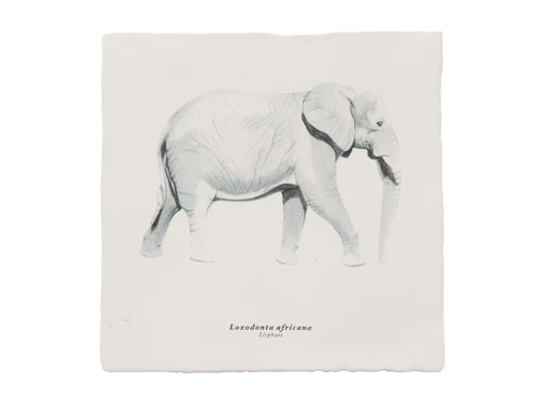 Rebellenclub x Lisa Tile - Elephant