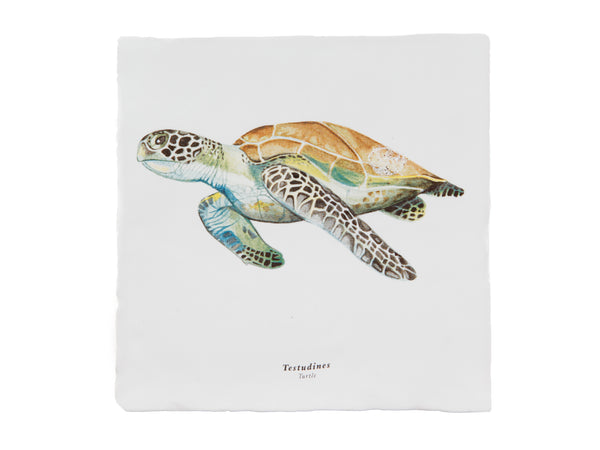 Rebellenclub x Lisa Tile - Turtle - Rebellenclub