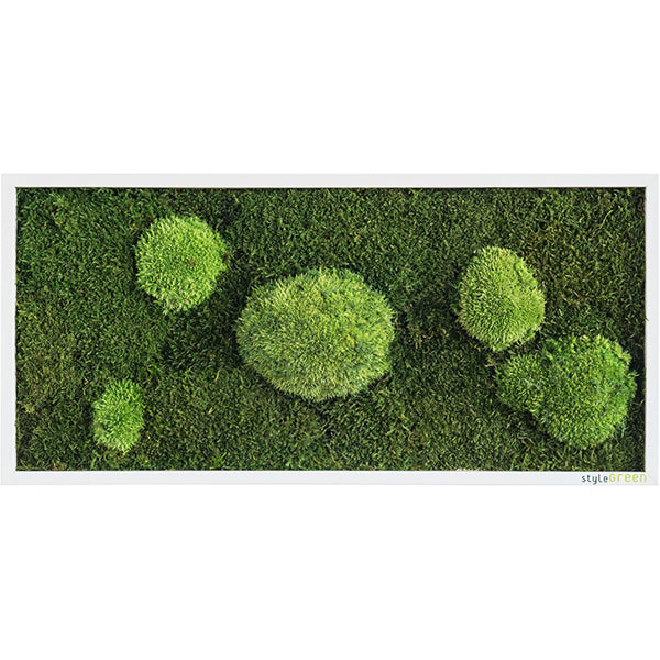 Stylegreen Verticale tuin - Forest & Pole moss - 57 x 27cm - Rebellenclub