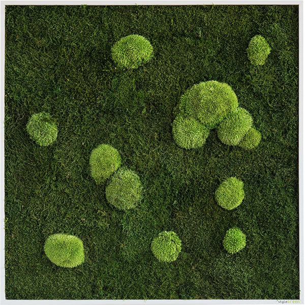 Stylegreen Verticale tuin - Forest & Pole moss - 80 x 80cm - Rebellenclub