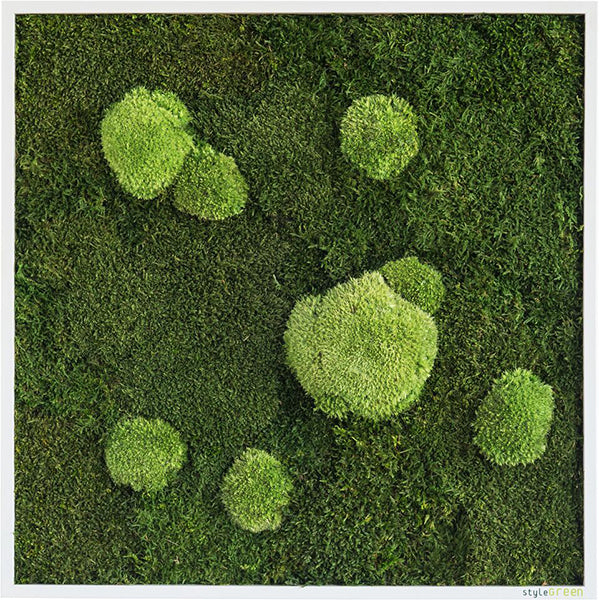 Stylegreen Verticale tuin - Forest & Pole moss - 55 x 55cm - Rebellenclub