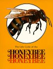 The Honeybee (Life Cycles Books)
