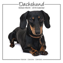 Load image into Gallery viewer, Dachshund Calendar - 2016 Wall Calendars - Dog Calendars - Monthly Wall Calendar By Avonside Studio