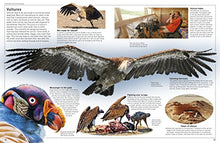 Load image into Gallery viewer, Dk Eyewitness Books: Eagle And Birds Of Prey: Discover The World Of Birds Of Prey How They Grow, Fly, Live, And Hunt