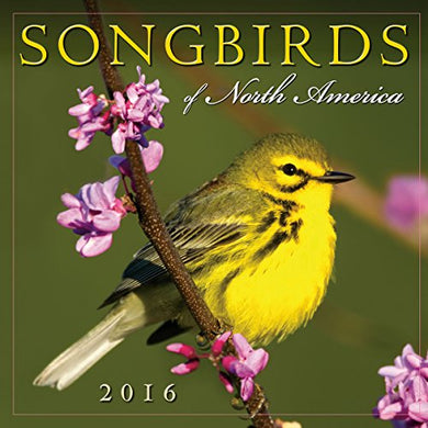 Songbirds Of North America 2016 Wall Calendar