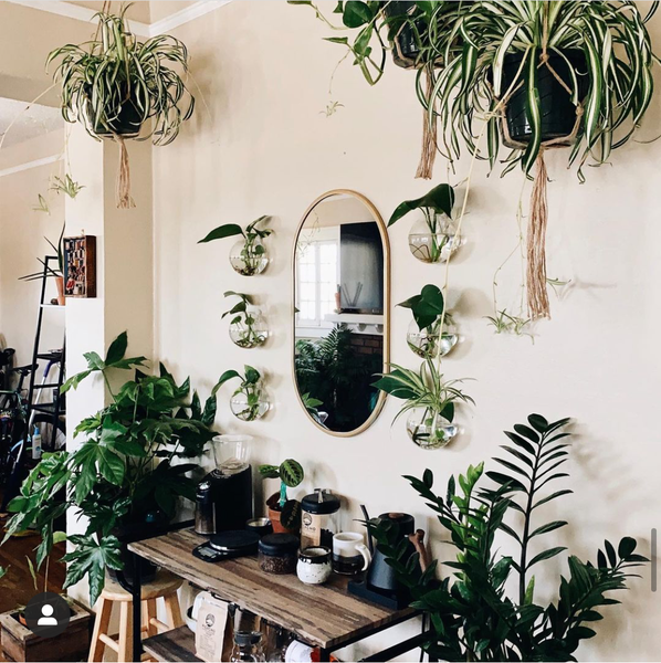Home coffee bar decorated with plants