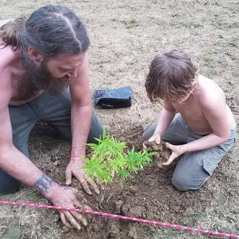 "Father and Son planting the ""mothers"".  Mothers are plants that have the best attributes that you want to breed with others."