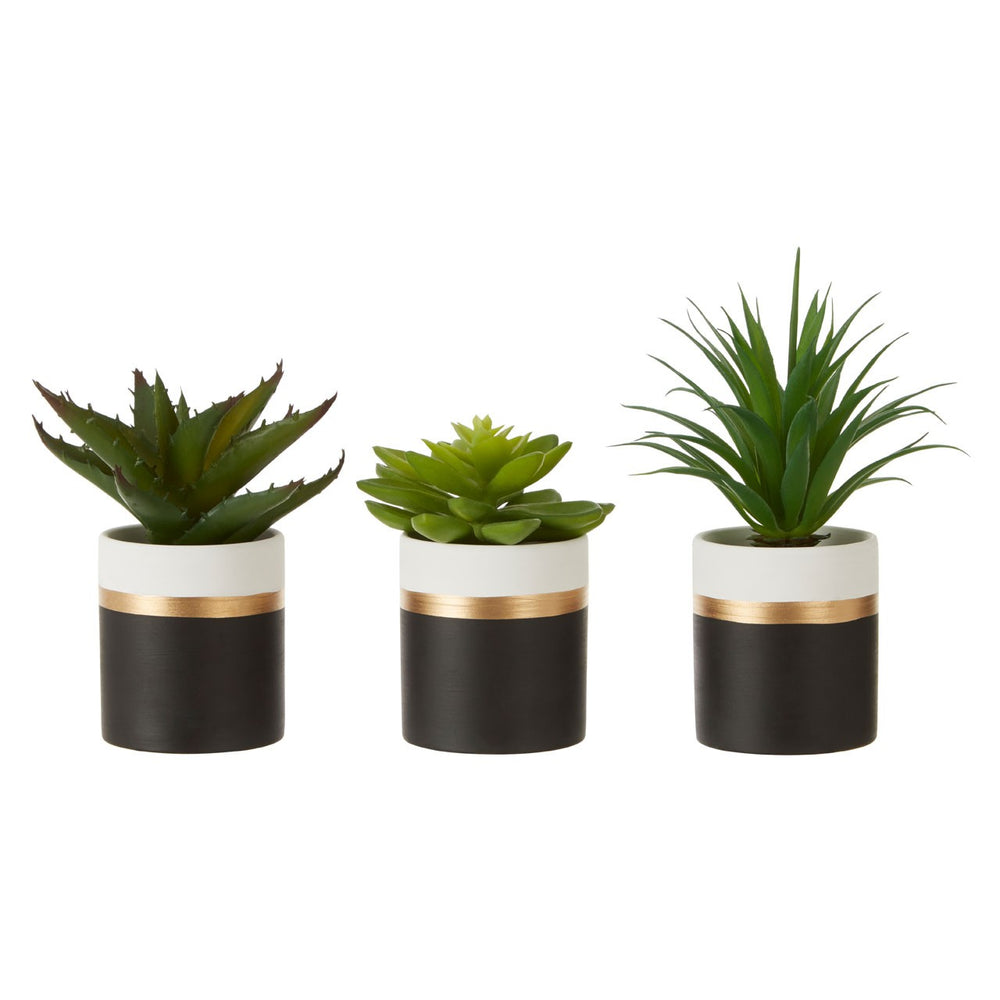 FIORI SET OF 3 BLACK POT SUCCULENTS