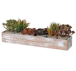 SET OF 6 ASSORTED SUCCULENTS IN WOODEN BOX