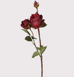 RUBY RED ROSE SHRUB STEMS x 3
