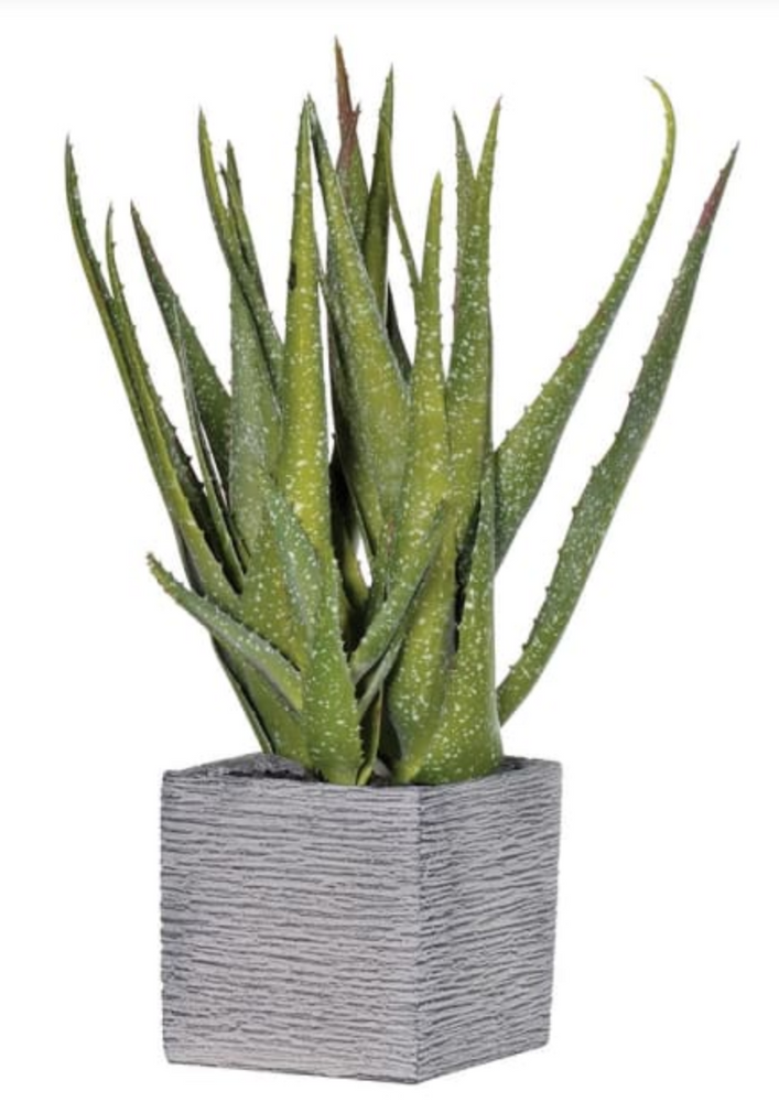 GREEN SPECKLED ALOE VERA IN SQ CEMENT POT