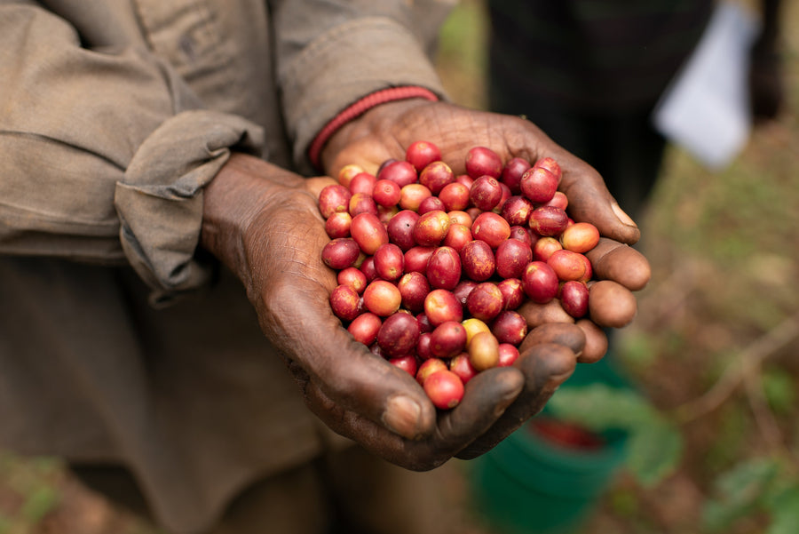 Akawa Project, Burundi - Single Origin