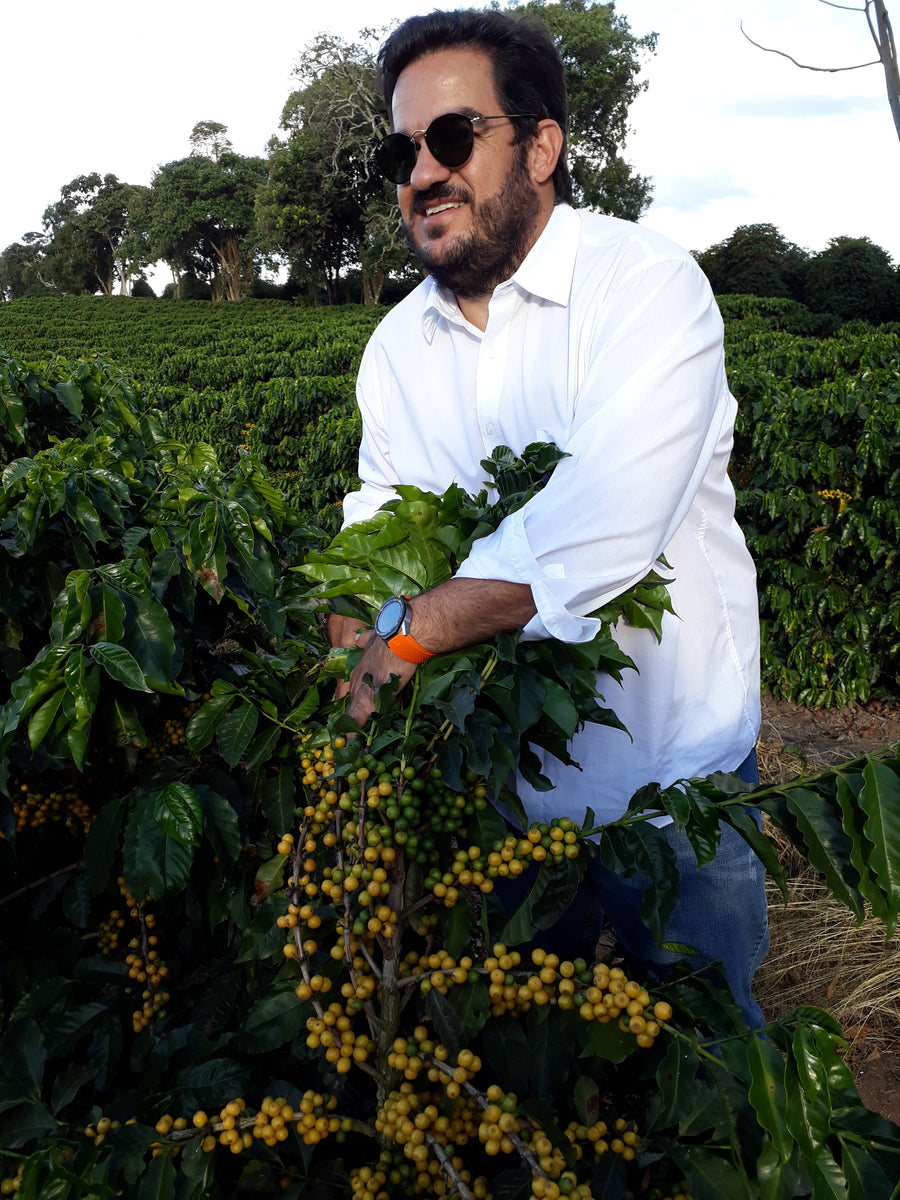 Santuario Project (Brazil) Yellow Bourbon Natural Anaerobic - Single Origin