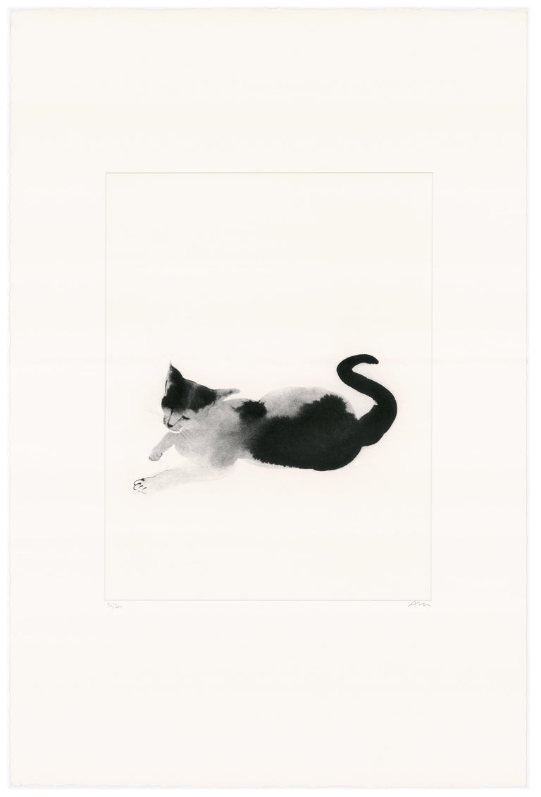 Cat © Aurore de la Morinerie