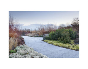The Winter Garden with frost on the path, RHS Garden Hyde Hall. December 2018.
