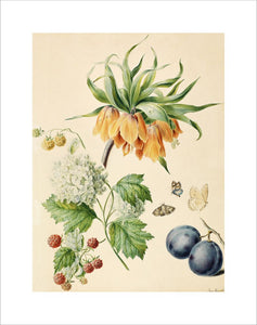[Fritillaria imperialis, viburnum opulus sterile, red and yellow berries, stone fruits, butterflies]