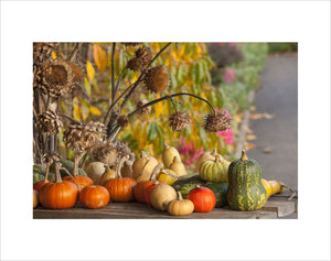Harvested pumpkins and squashes