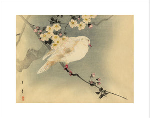 Dove with blossom