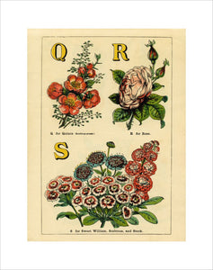 Q for Quince, R for Rose, S for Sweet William, Scabious and Stock