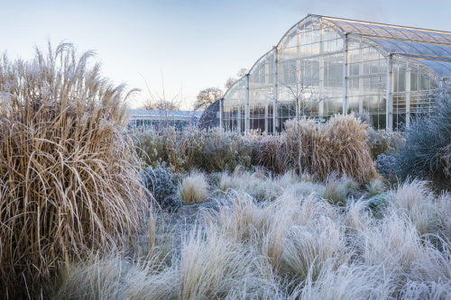 Glasshouse borders in Winter, RHS Wisley Garden