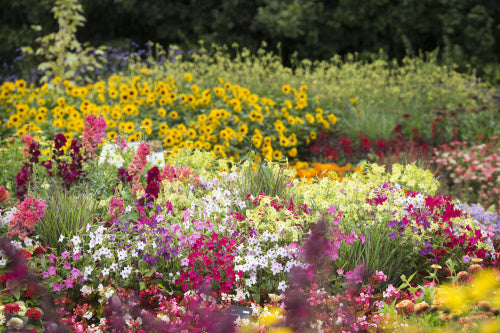 Floral Fantasia bedding display at RHS Garden Hyde Hall