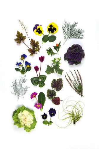 A plate of Winter Bedding