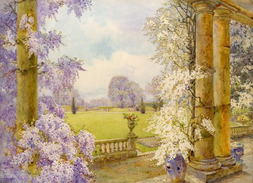 Wisteria from the house, Dyffryn