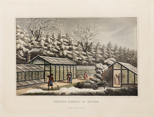 Forcing garden, in Winter