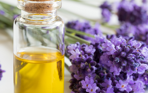 Is Lavender Oil Good for Joint Pain?