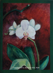 Phalaenopsis in Burnt Umber