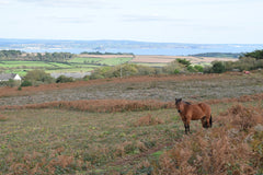 Sancreed Beacon Wild pony in the distance St Michaels Mount