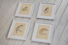 Load image into Gallery viewer, Antique Hand Coloured Owl Prints Framed